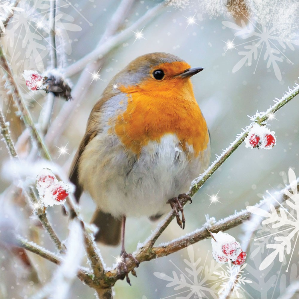 BET Christmas Robin